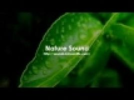 nature_sound.jpg