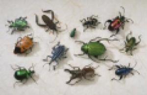 insecten.PNG