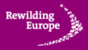 rewildingeurope-small.png