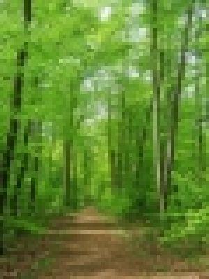 forest-103374_640.jpg