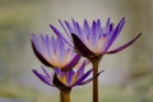 bloem2.jpg