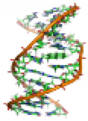 Benzopyrene_DNA_adduct_1JDG.png