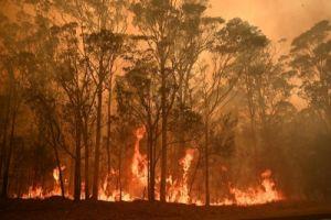 Bosbrand Australië