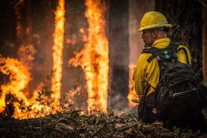 Brandweerman bij een bosbrand