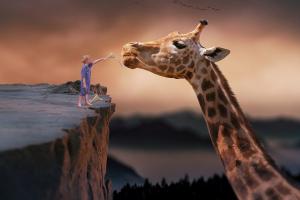 kind geeft eten aan een giraf