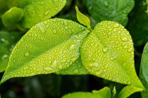 blaadjes van een plant
