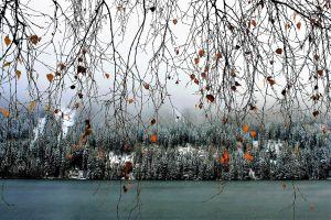 Creatieve foto van een boom aan water