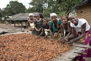 vrouwen aan het werk met cacoabonen