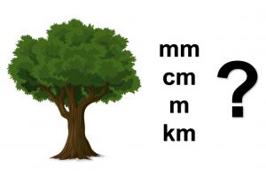 boom met vraagteken en lengtematen mm cm m km