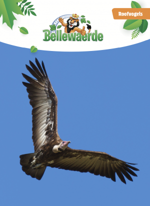 Cover bundel roofvogels Bellewaerde