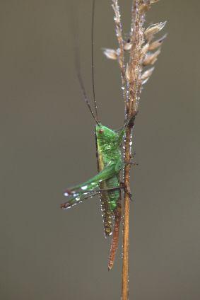 Insectenwandeling