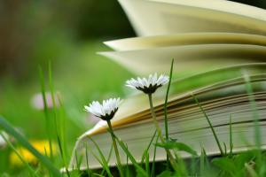 opengeslagen boek in het gras