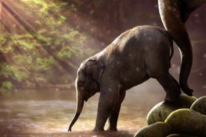 klein olifantje stapt aar het water