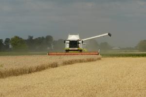 graanveld met pikdorser