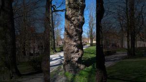 Screenshot video de wonderen van een boom