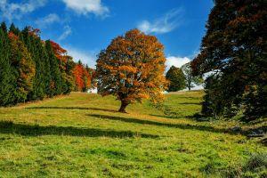 Boom op een grasveld