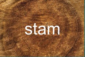 afbeelding van stam