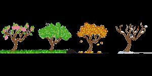 4 bomen tijdens 4 seizoenen