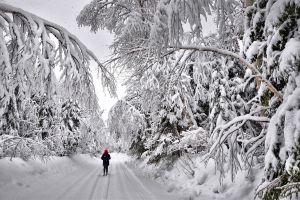 sneeuwlandschap met langlaufer