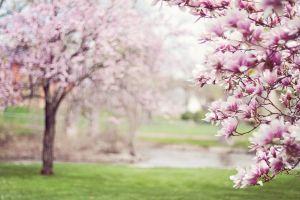 bloesems van een boom
