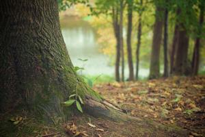 boomstam met takjes en bladeren