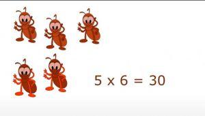 5*6=30 (+ 5 mieren)