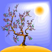 boom in de zon