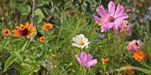 verschillende soorten bloemen (roos, oranje en wit met geel hartje)