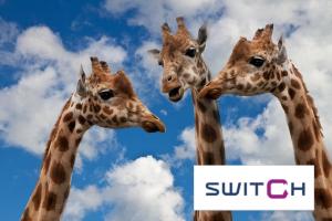drie giraffen