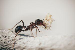 Foto van een mier