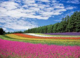 een veld met bloemen in verschillende kleuren