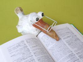 vogel met bril leest in woordenboek