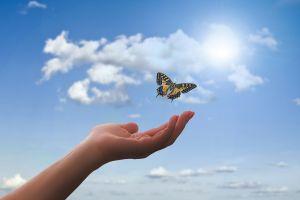 vlinder vliet uit hand