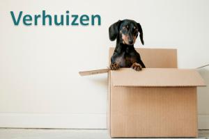 Hond in een verhuisdoos