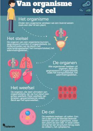 poster van organisme tot cel