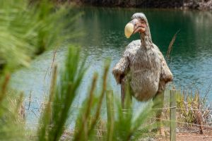 dodo vogel