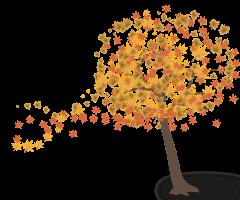 een boom die blaadjes verliest