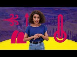 Voorbeeld van video 'Array'