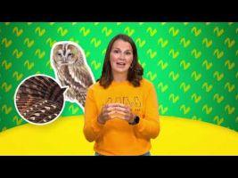 Voorbeeld van video 'Aangepaste kenmerken van dieren'