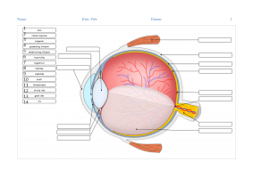 Voorbeeld uit: Oefeingenbundel_het_oog.pdf