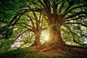 een grote boom