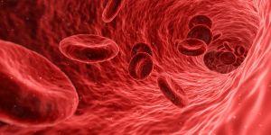rode bloedcellen in een ader