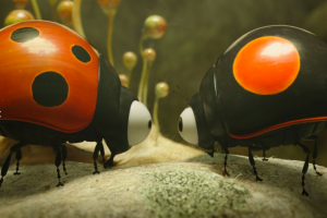 Twee lieveheersbeestjes die naar elkaar kijken