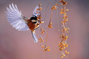 fladderende vogel