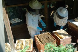 imker werkt aan bijenkast