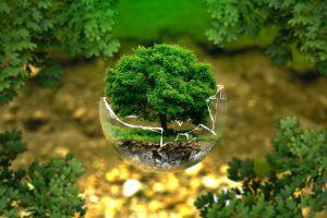 boompje groeit uit een wereldbol