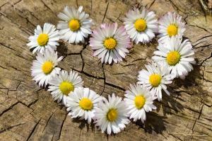 bloemen in de vorm van een hartje