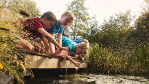 Kinderen determineren insecten in een vijver