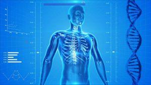 lichaam met het skelet zichtbaar