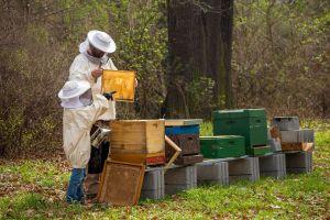 imker bij bijenkasten